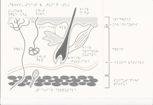 Tactile Biology Diagrams Layers of Skin